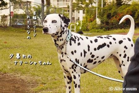 12m_20141102025253bbc.jpg