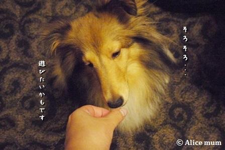 1_20141030012519d00.jpg