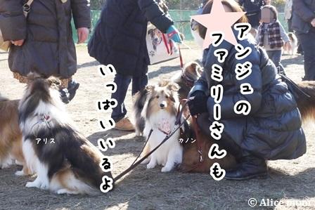 2m_20141215021515d3d.jpg