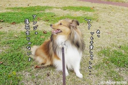 4_2014111401480938f.jpg