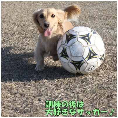 灰!サッカー2
