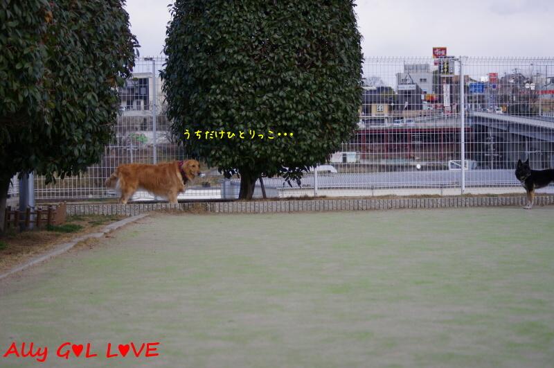 IMGP3415.jpg