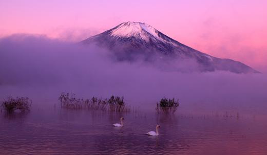 白鳥と霊峰富士・朝霧の景