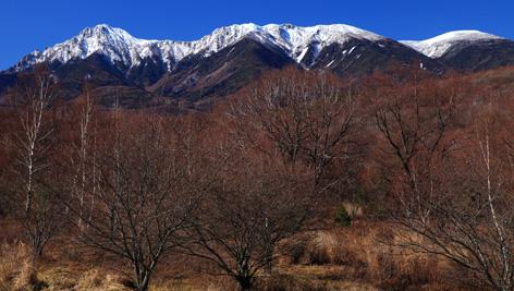 新雪の八ヶ岳と葉を落とした樹林