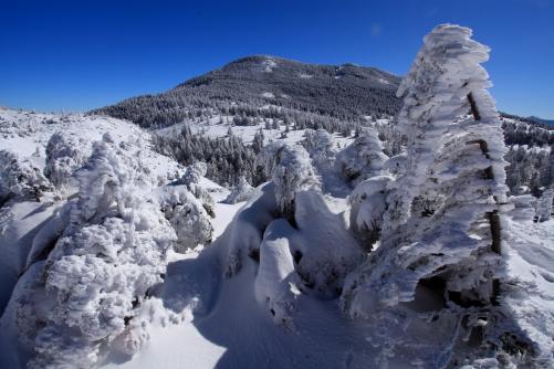縞枯山と樹氷