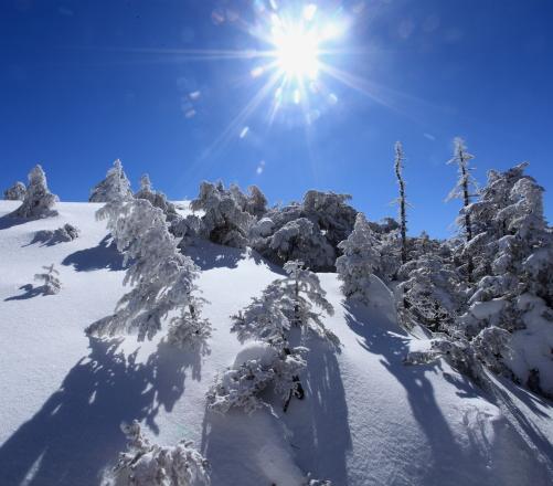 太陽と樹氷