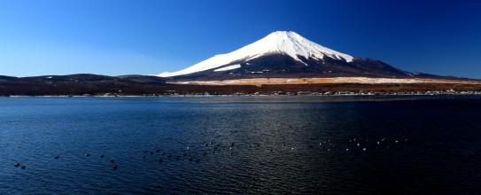 カモ浮かぶ山中湖と富士山