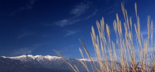 ススキと白銀の峰