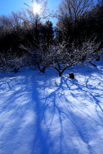 樹影と太陽