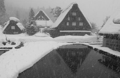降雪の合掌造り民家と水田
