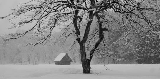 柿木のある雪景色