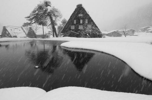 豪雪地帯の合掌民家と松と水田の風景