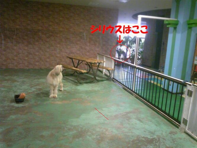 DVC00311_convert_20100622161544.jpg