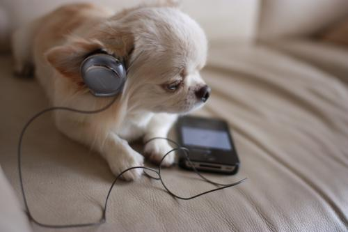 Listen to the music2