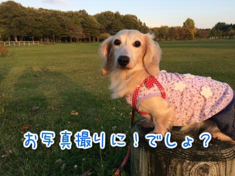 20141010223600.jpg
