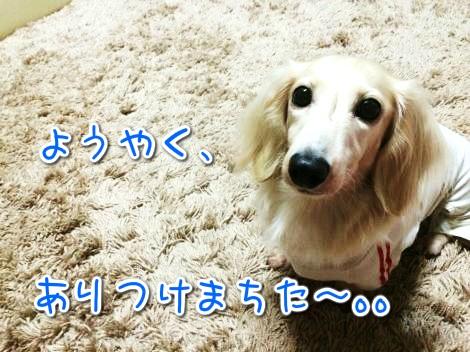 20141019184421.jpg