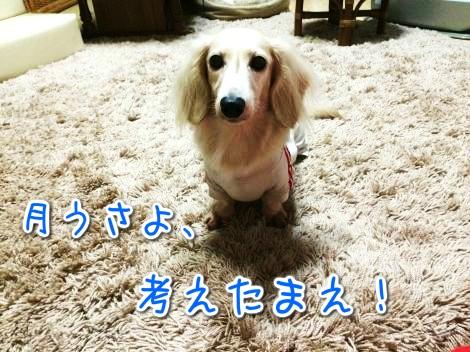 20141019184653.jpg