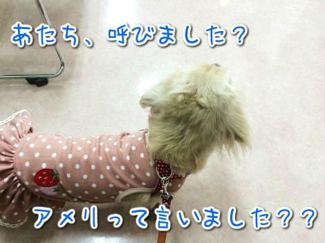 20141029220441.jpg
