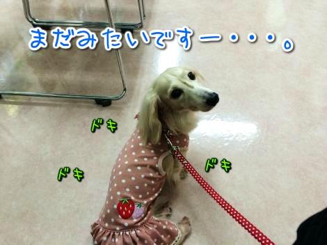 20141029221129.jpg