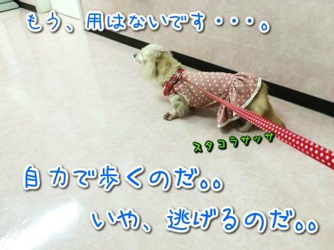 20141029221932.jpg