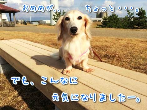 20141114214405.jpg