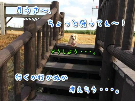 20141114215550.jpg