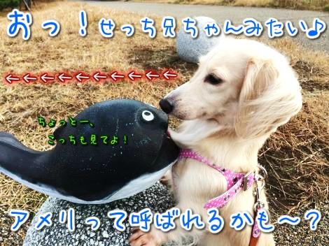 20141114220637.jpg