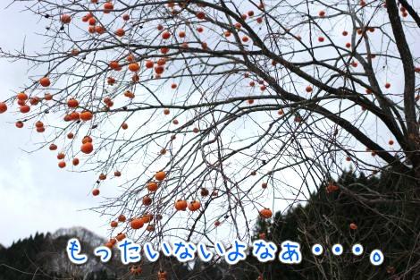 20141203191220.jpg