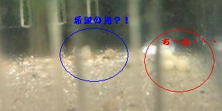 20101119215147ちん