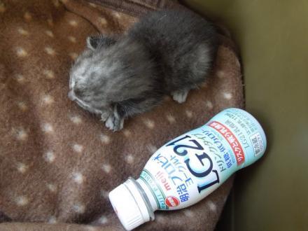 ヨーグルトのペットボトルより小さいです