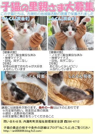 内灘子猫のアピールポスター