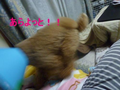 縺ゅi繧・convert_20101221194543