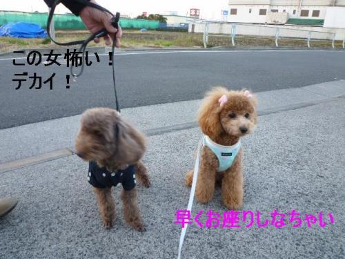 縺ァ縺九>_convert_20101221194627