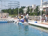 八景島 (16)