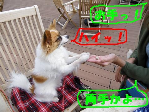 IMGP0915_convert_20110320143819.jpg