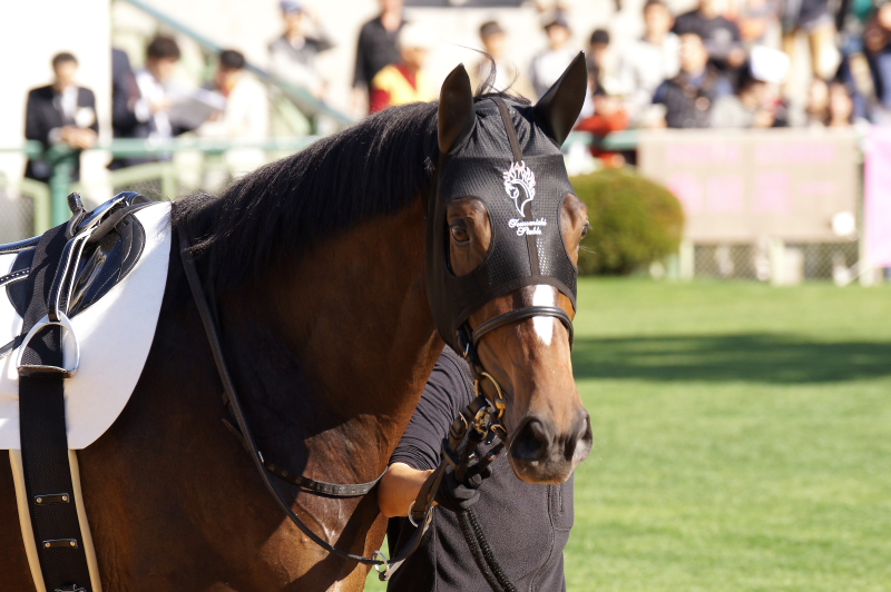 エトランドル 新馬 3
