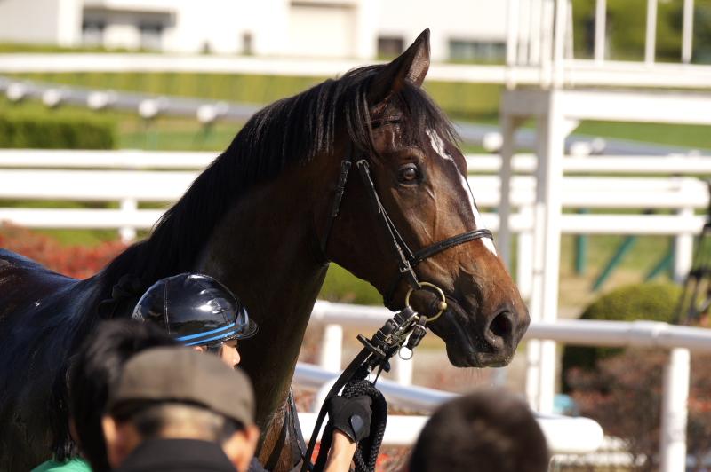 エトランドル 新馬 8