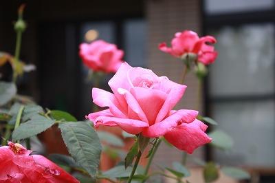 軽井沢2013 006