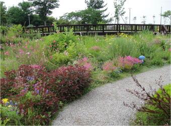 wild flower garden nagoya