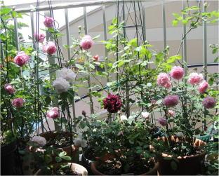 velanda garden
