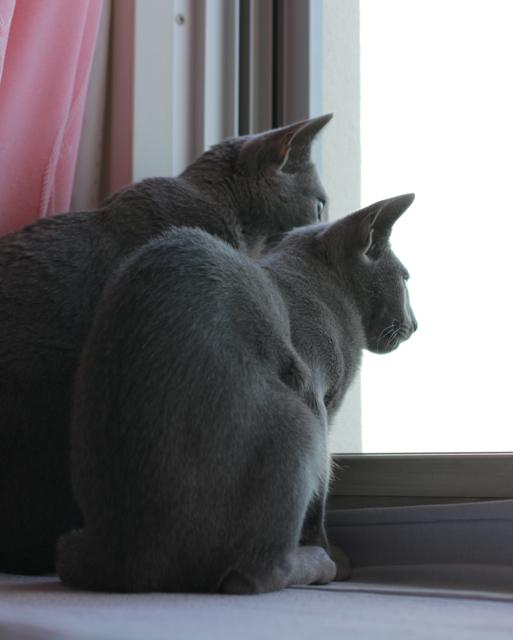 アンとエマ、窓辺