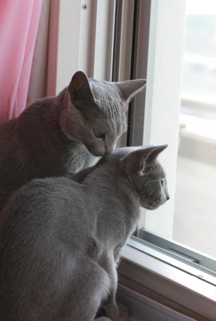 アンとエマ、窓辺2