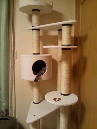 catタワー1