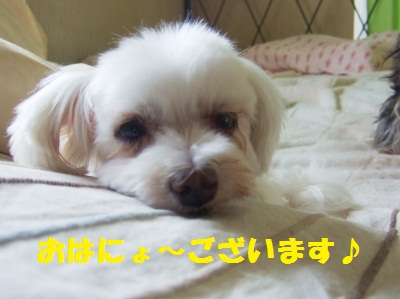 2010_09030002-1.jpg