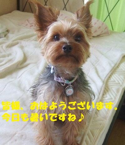 2010_09030003.jpg