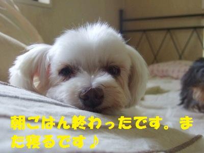 2010_09030004-1.jpg