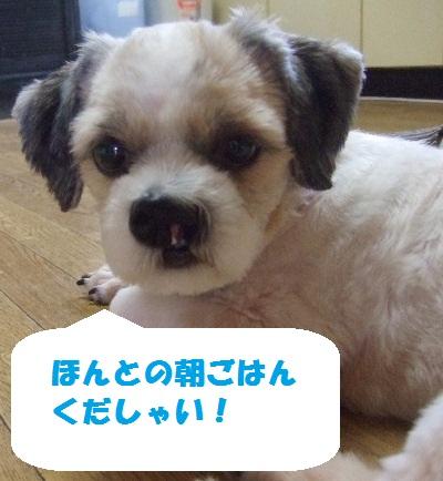 2010_09030008.jpg