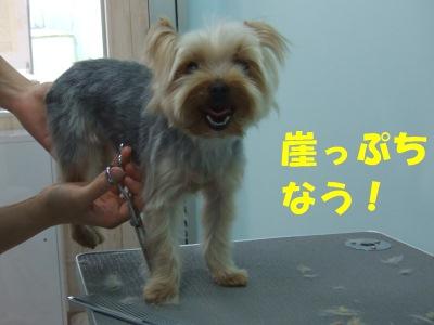2011_05190003.jpg
