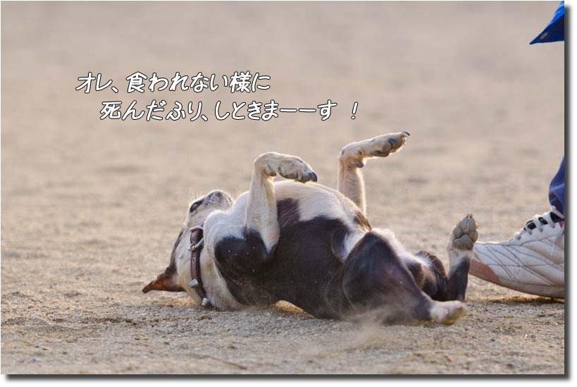 DSC_8745k1.jpg