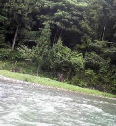 yuyuyuyu (3)